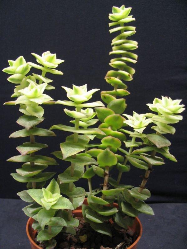 Mes plantes grasses et cactus succulentes for Tous les plantes